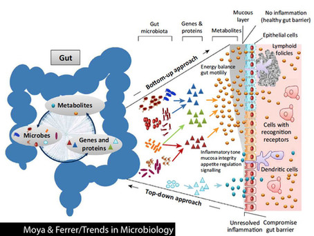 A Better Understanding of The Microbiome.