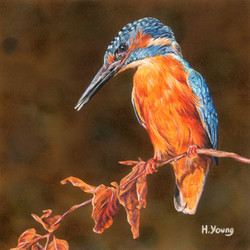 Kingfisher - Acrylic & Colour Pencils