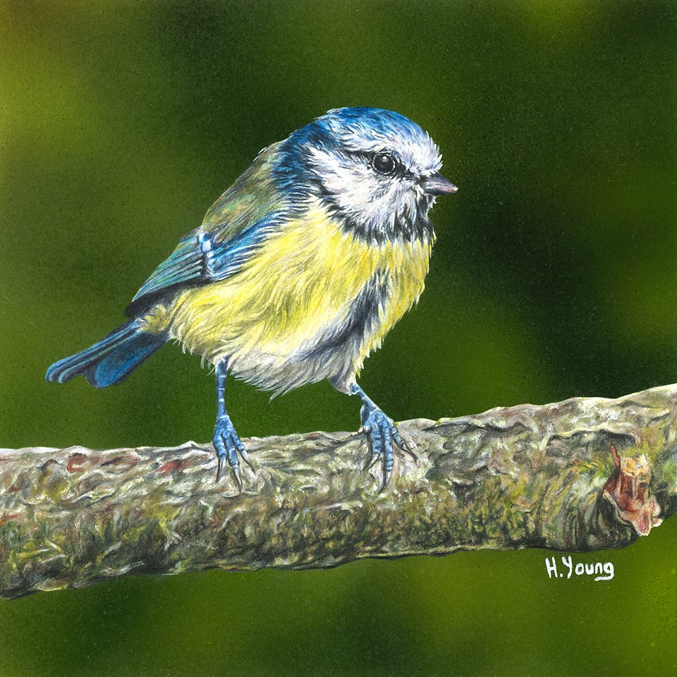 Bluetit - Acrylic & Colour Pencils