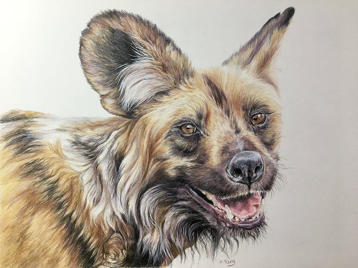 African Painted Wolf
