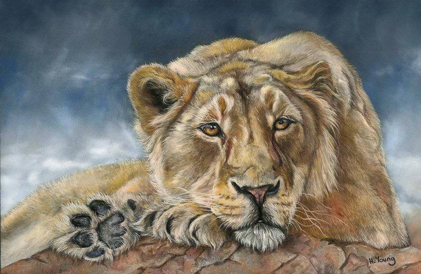Pastel Lioness