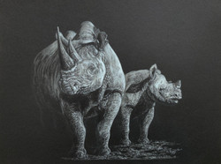 White Rhinos - White Colour Pencil