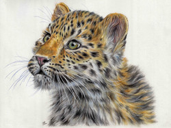 Leopard Cub - Colour Pencils