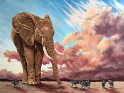 Elephant - Oils