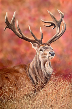 Stag - Oils