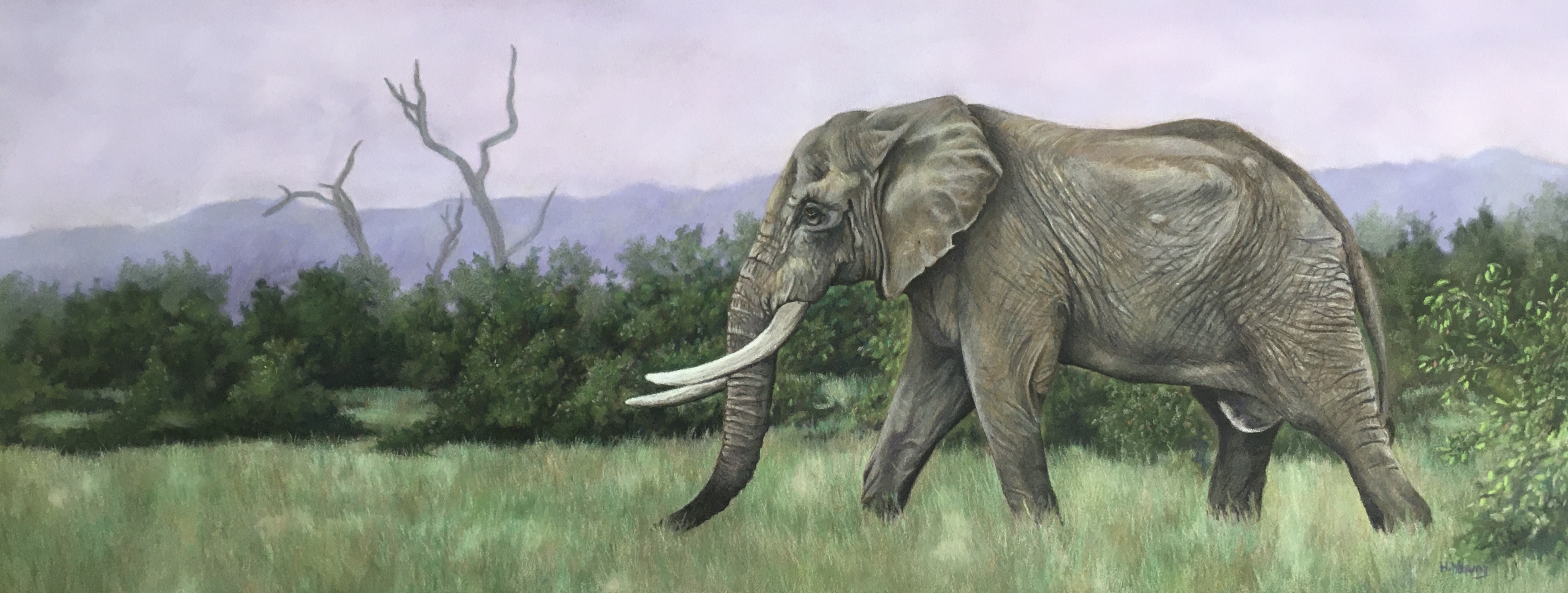 Bull Elephant - PanPastels & Colour Pencil