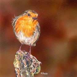 Robin - Acrylic & Colour Pencils