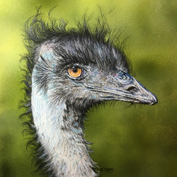 Emu - Acrylic & Colour Pencils