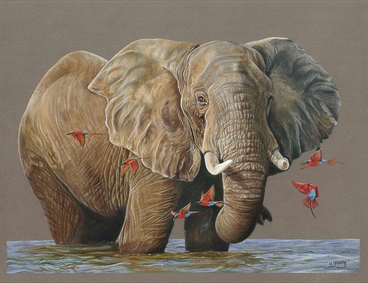 Zambezi Elephant + Southern Carmine Bee-eaters