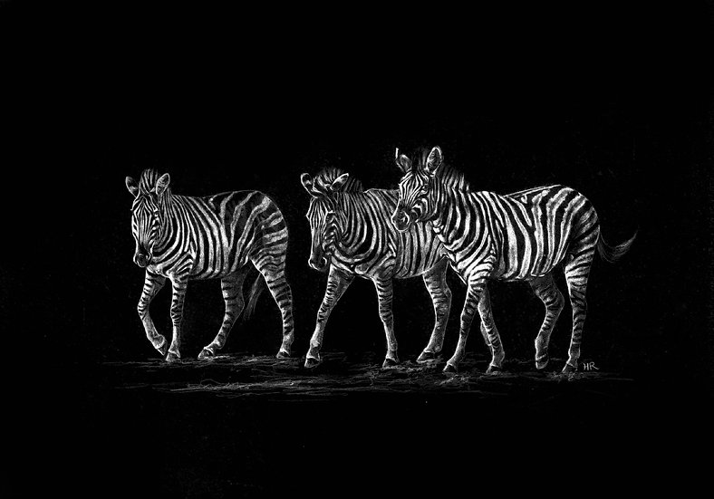 Three Burchell's Zebra