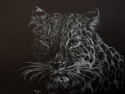 Leopard - White Colour Pencil