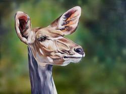 Kudu - Acrylic & Oils