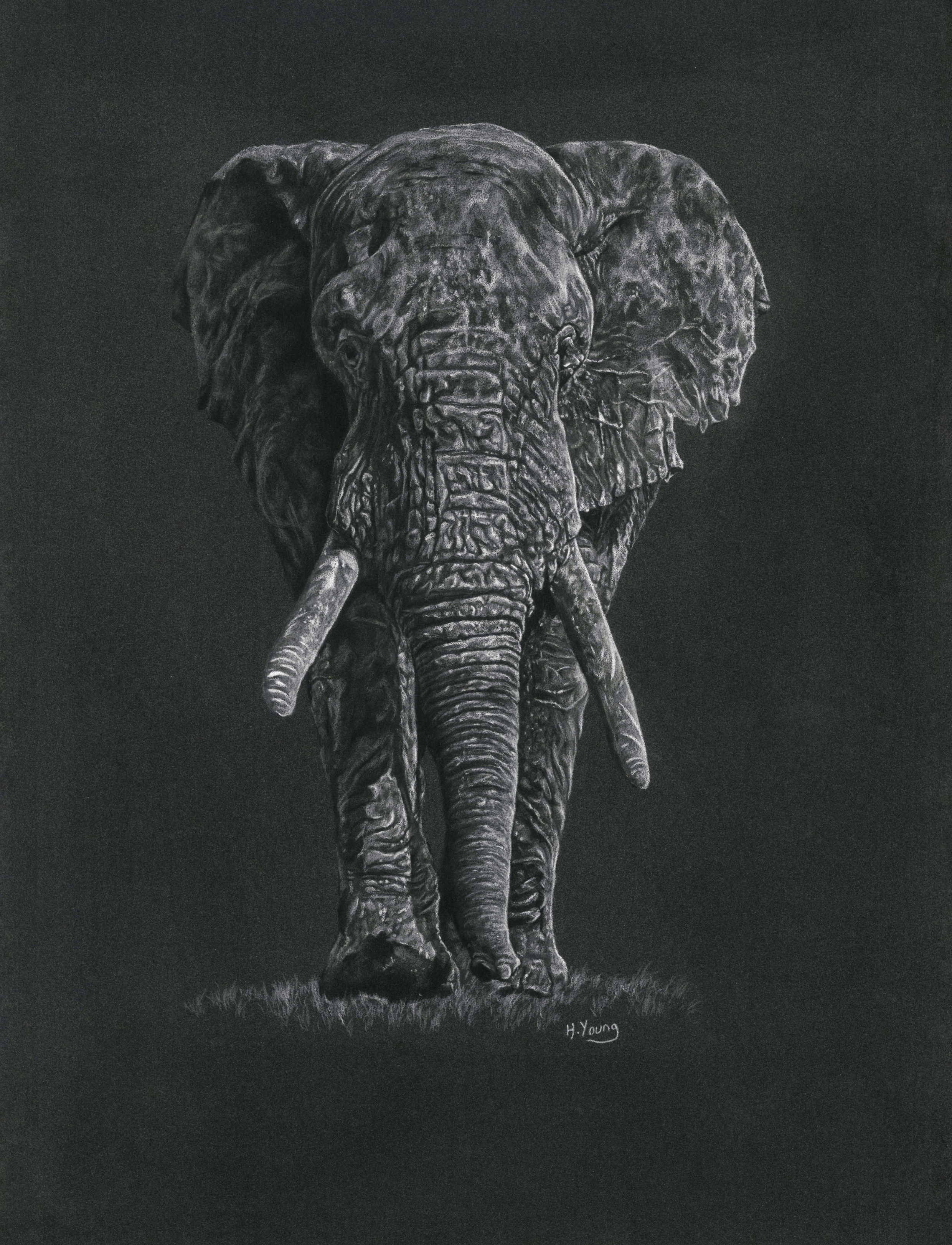 Elephant Bull - White Colour Pencils