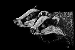 Badgers - White Colour Pencil