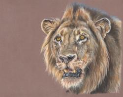 Lion - Pastels