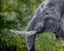 Elephant - Acrylics & Oils
