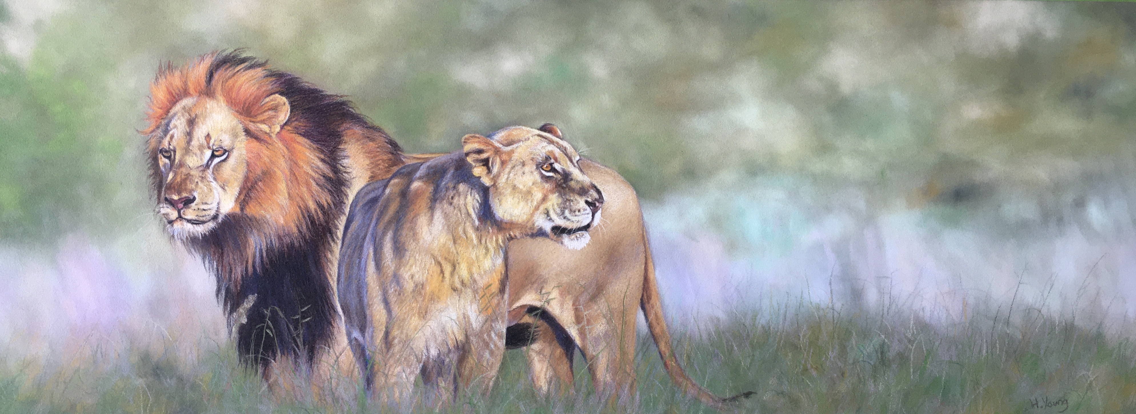 Lions - PanPastels & Colour Pencil