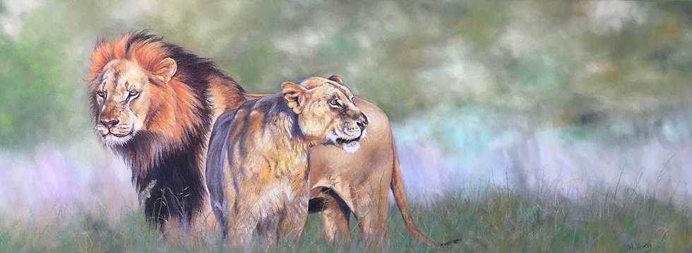 Morning Lions
