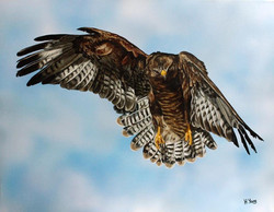 Buzzard - Acrylic & Oils