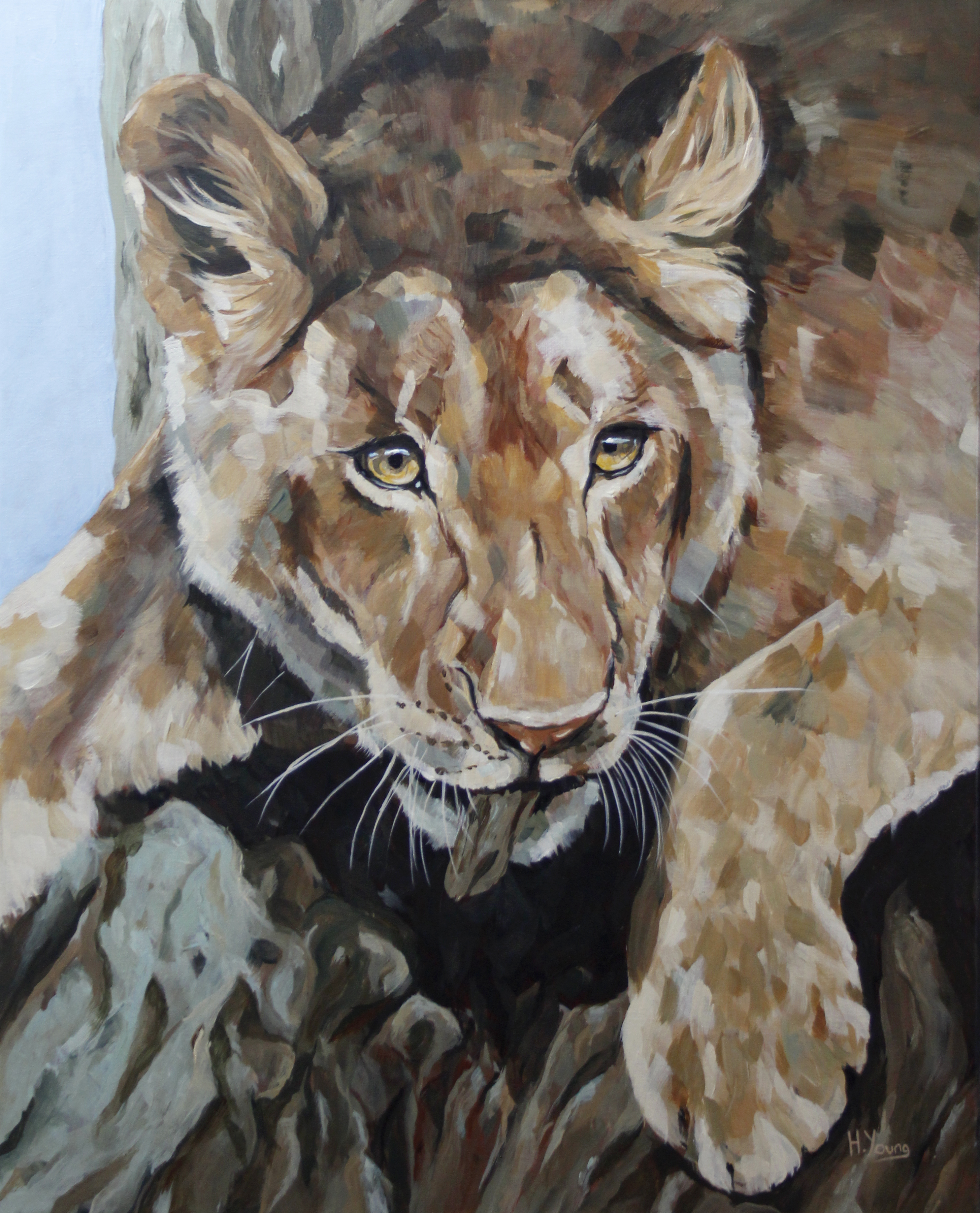 Young Lioness - Acrylics