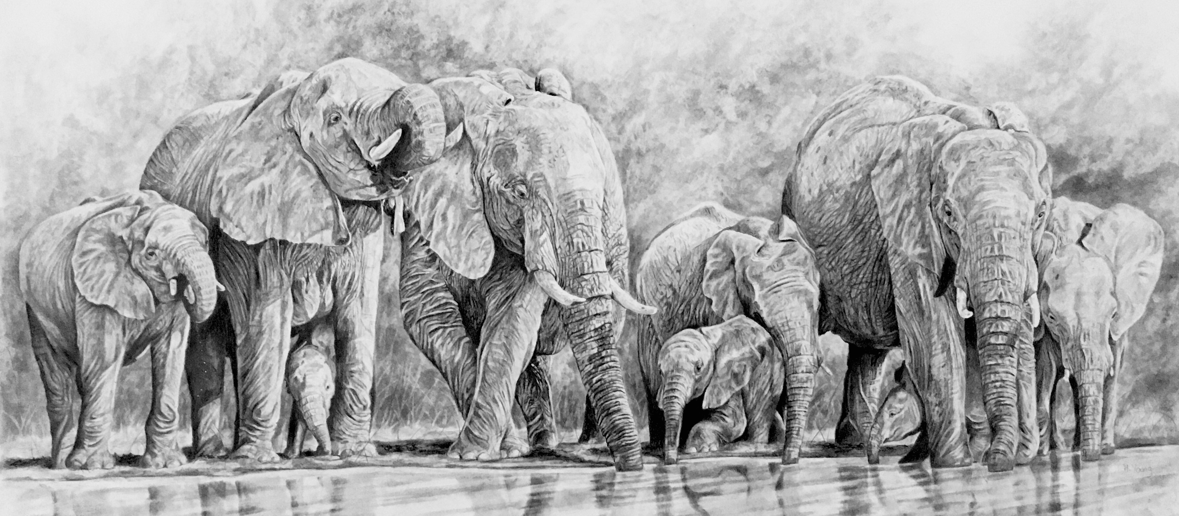 Elephant Herd - Graphite