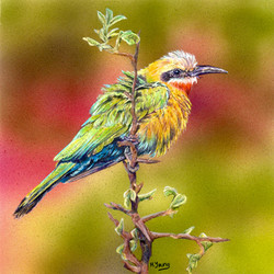 Bee-Eater - Acrylic & Colour Pencils