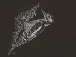 Woodpecker - White Colour Pencil