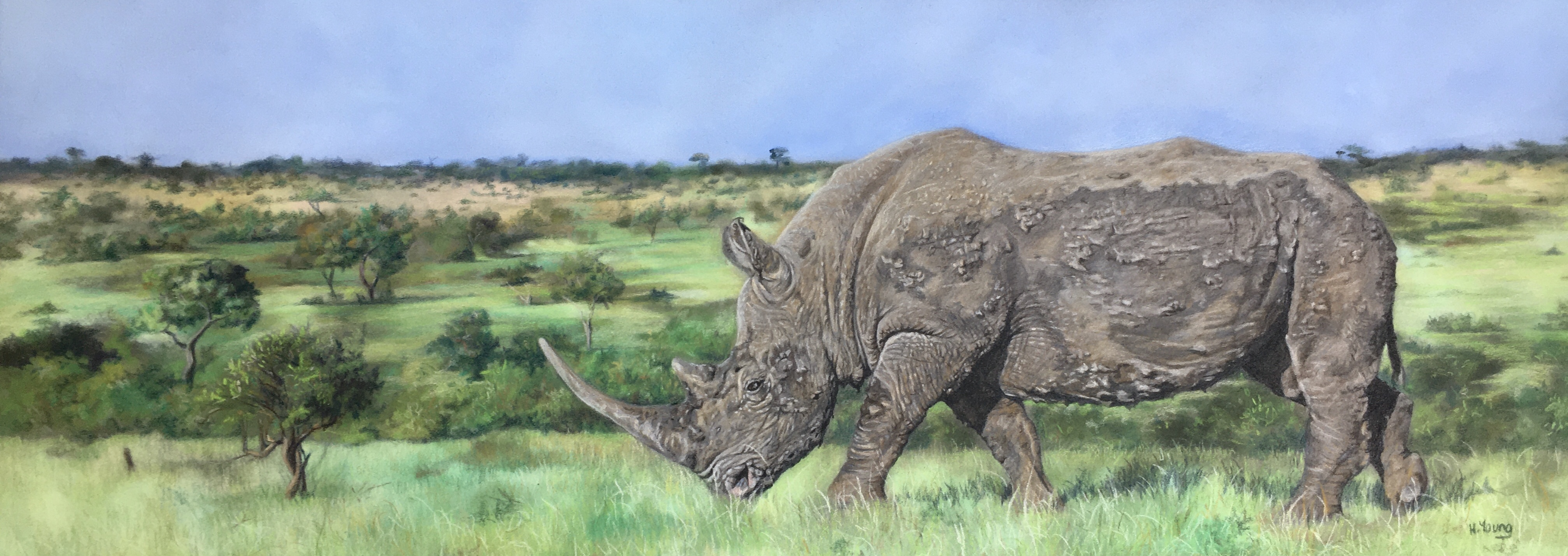 White Rhino - Colour Pencil