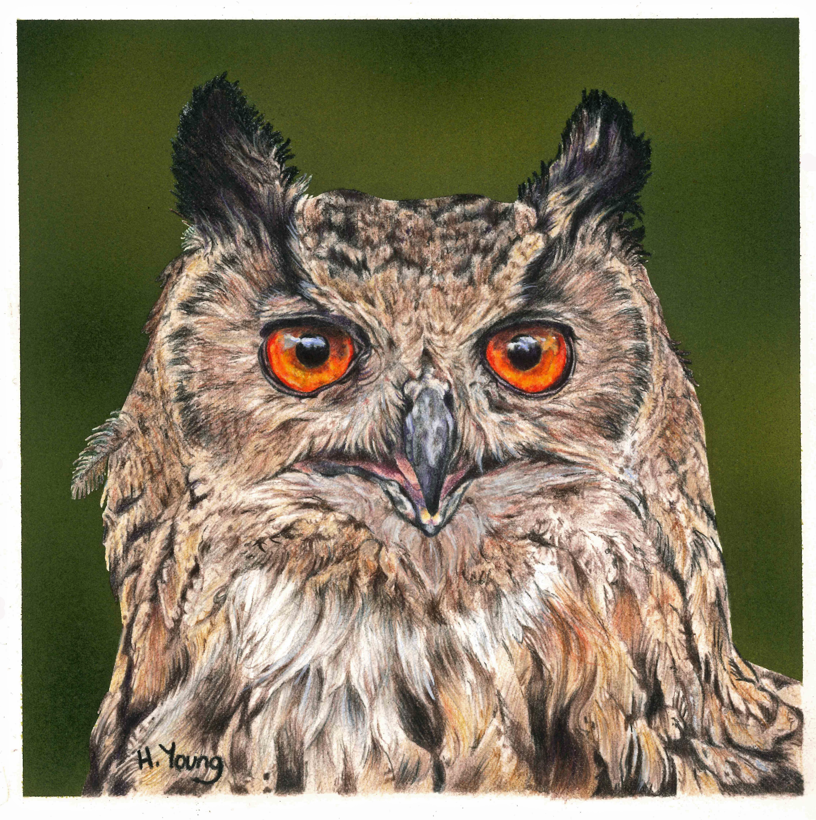 Giant Eagle Owl - Acrylic & Colour Pencils
