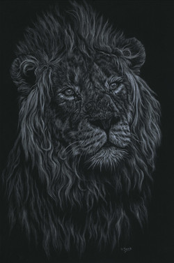 Lion - White Colour Pencils