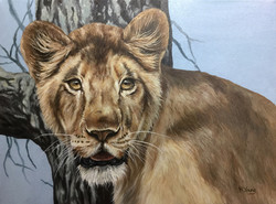 Young Lioness - Oils