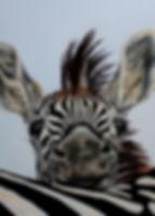 Baby Zebra Oil Painting 18 x14.jpg