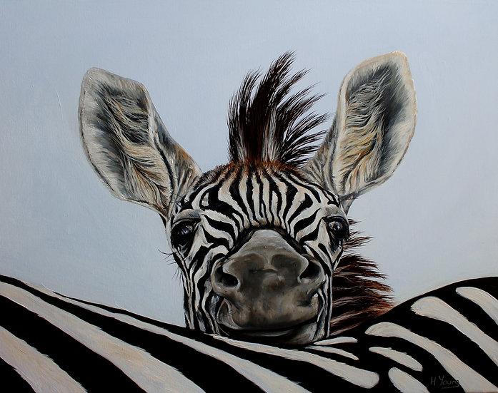 Cheeky Zebra Foal