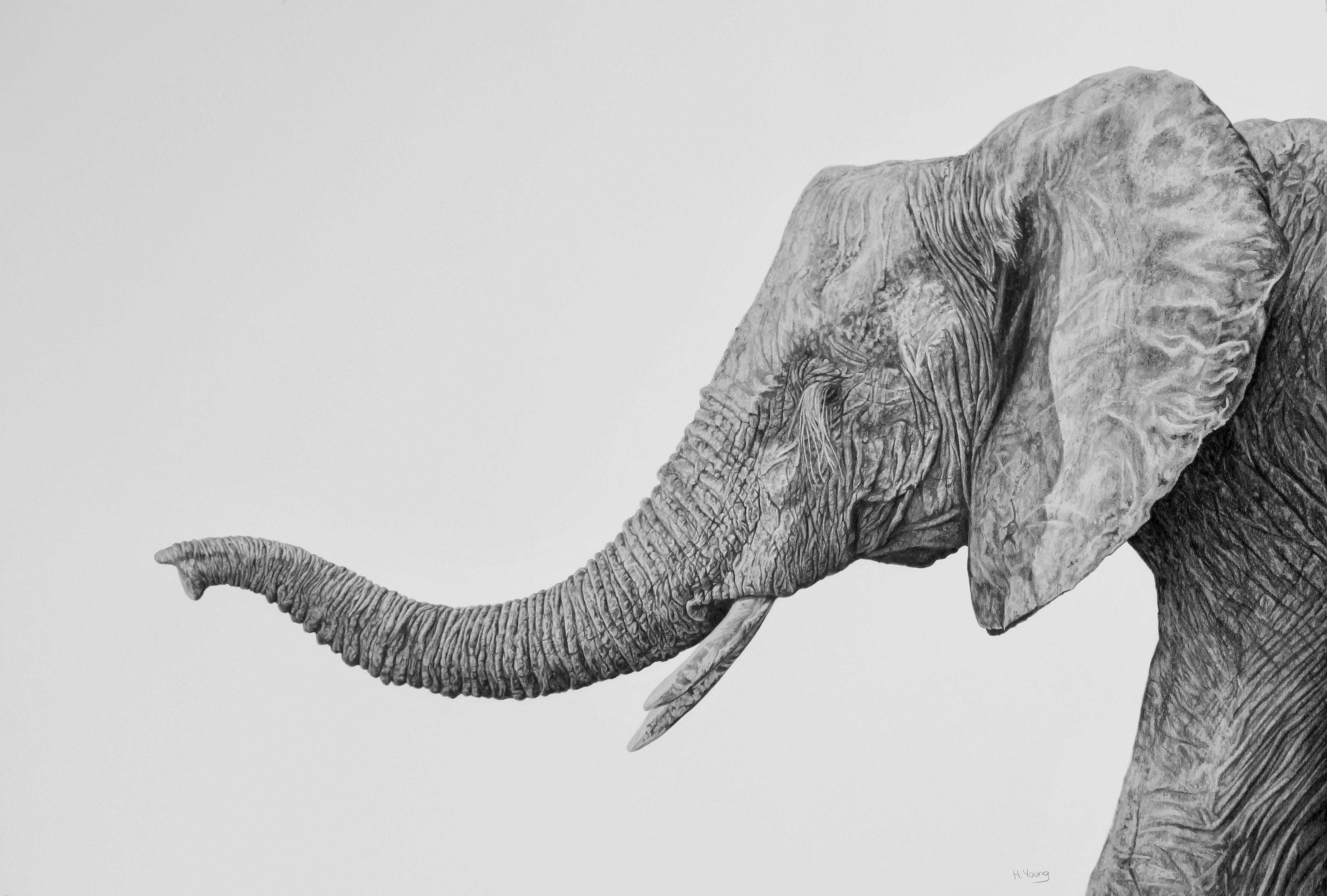 Elephant - Graphite