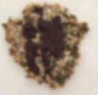עוגיות זרעונים מתוקות.PNG