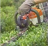 Bush and shrub hedge trimming,  berks county, Pennsylvania.