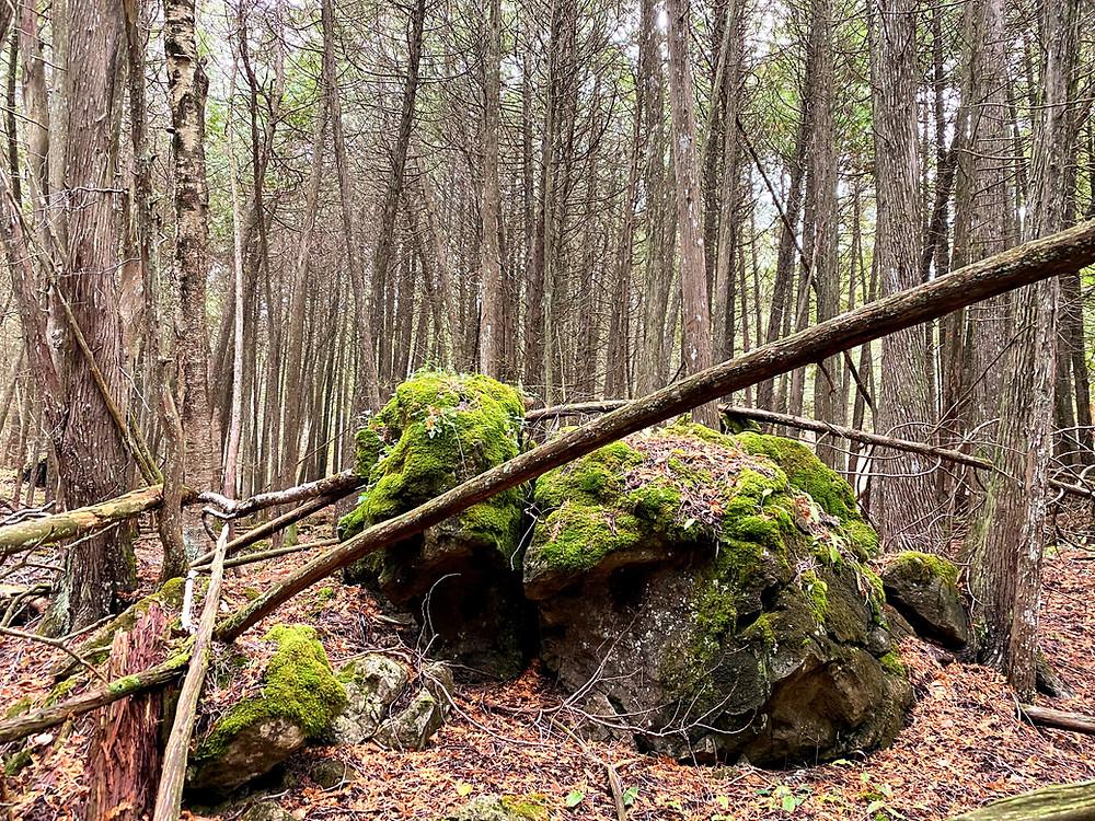 A creature-like boulder