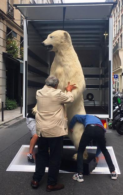 Chargement d'un ours blanc