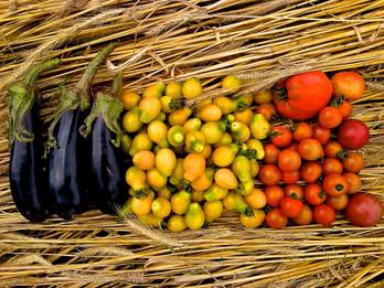 Eggplant Tomatoes.jpg