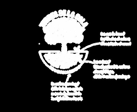 Logo Diagram White_WebsiteFNL.png