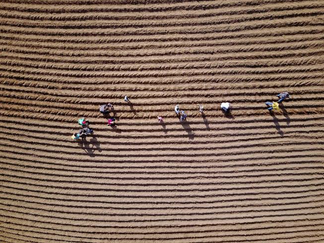plowed fields.jpg