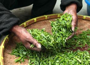 Long jing: um chá histórico!