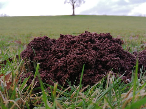 molehill organic farm sustainable farmin
