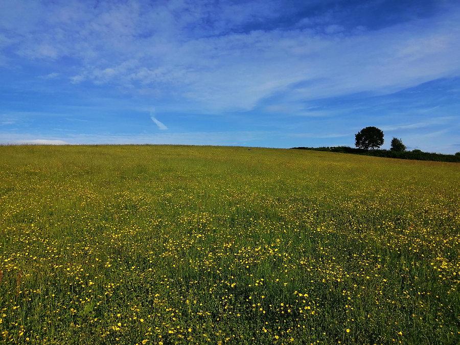 organic free range grass fed farm beef t