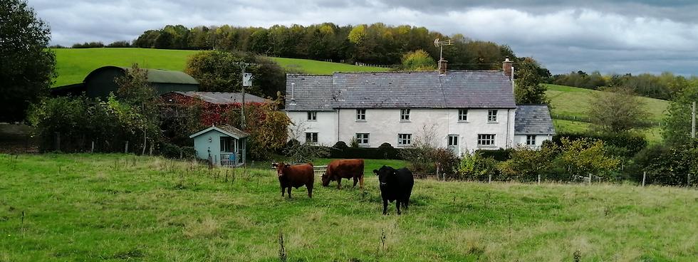 organic free range grass fed beef trefoi