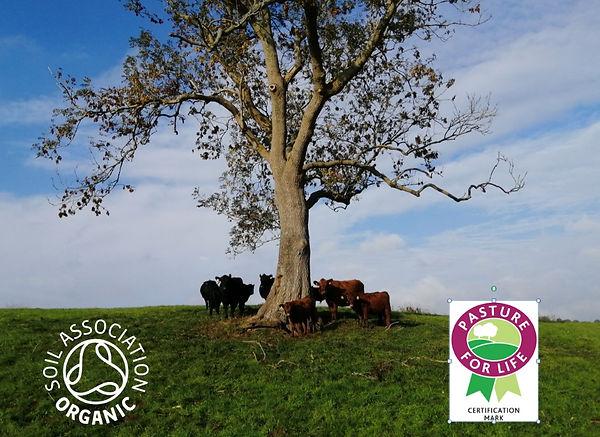pasture for live fed soil association or
