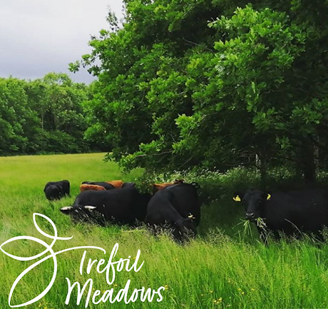trefoil%20meadows%20grass%20fed%20organic%20dexter%20beef%20boxes%20from%20monmouthshire%20south%20w
