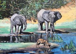 Elephants at the waterhole - Big 7