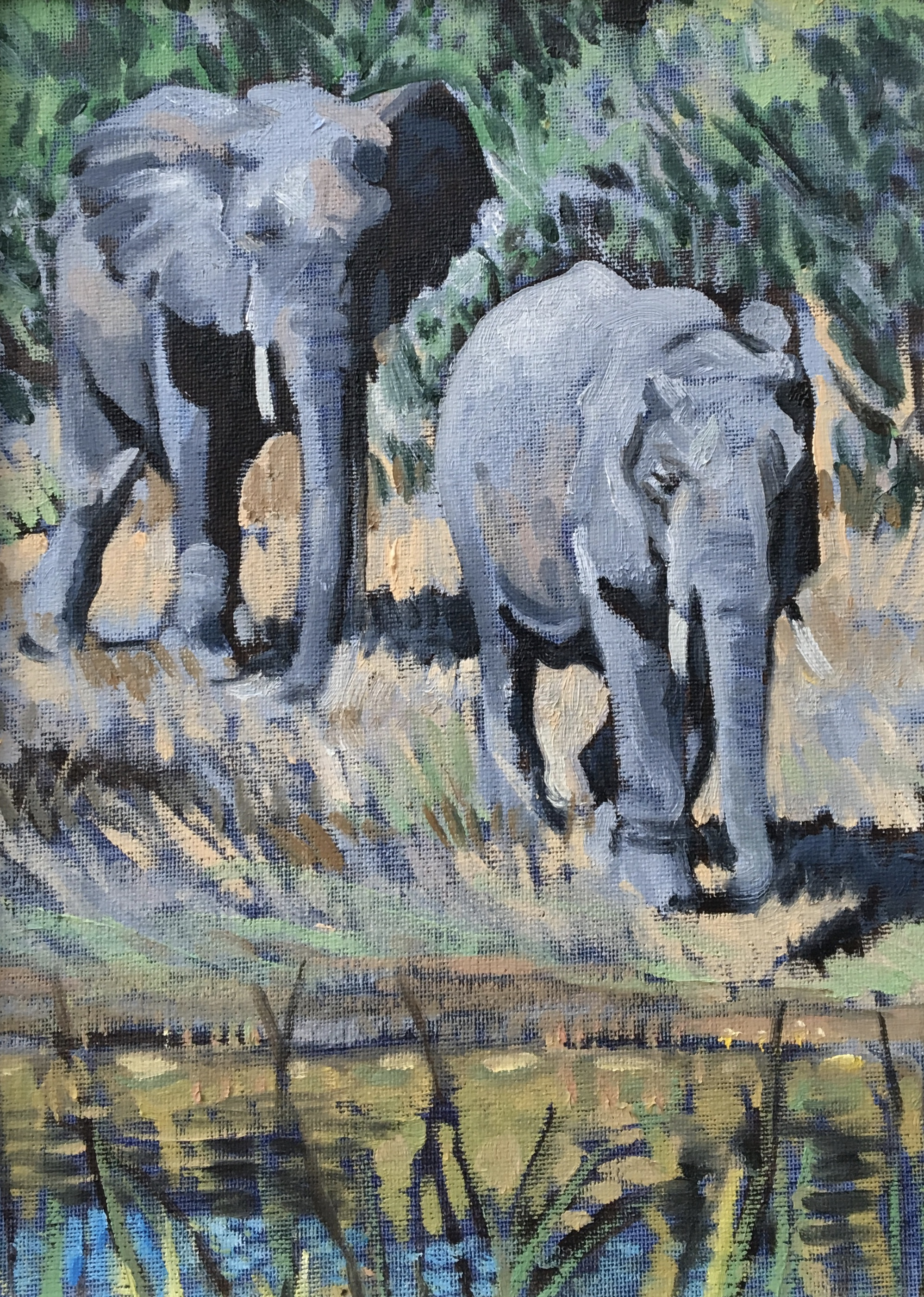 Elephants - Big 7
