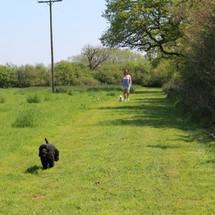 Walking aroud one of the fields